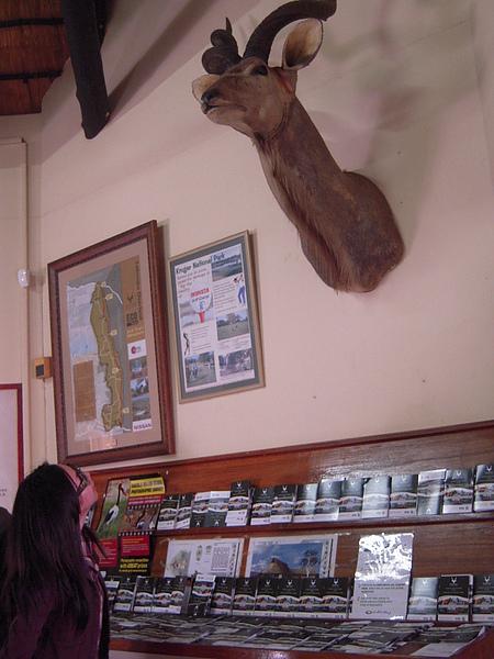 牆上有標本,每個都超大。