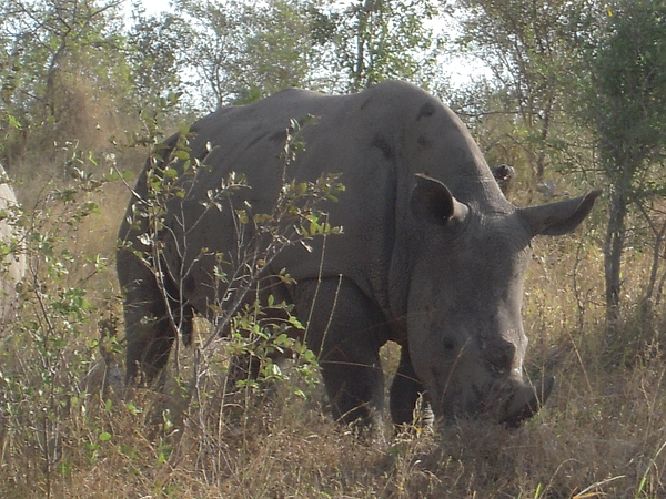 沒多久看到犀牛