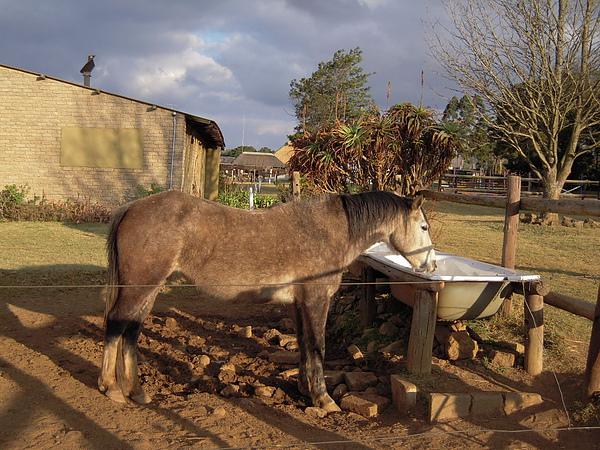 這裡也有養馬