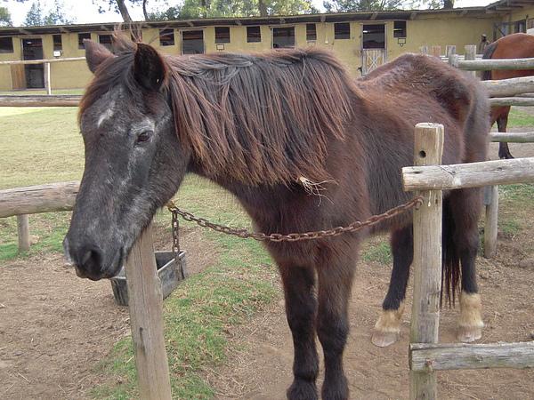 這隻馬很有心機