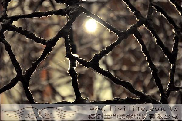 生命禮儀-交織的網