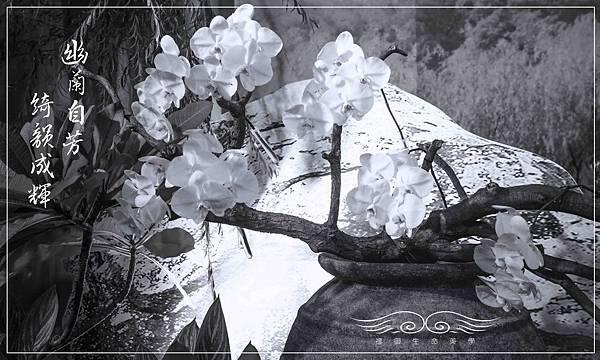蘭花古甕-1.jpg