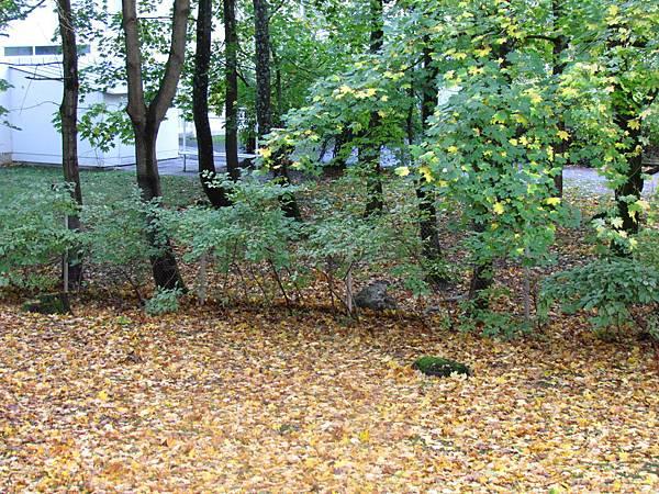 秋日錯落交疊的落葉