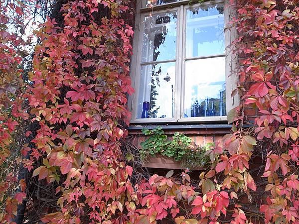 秋日轉紅的樹葉
