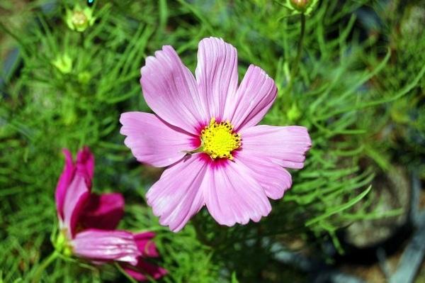 清境-16花.jpg