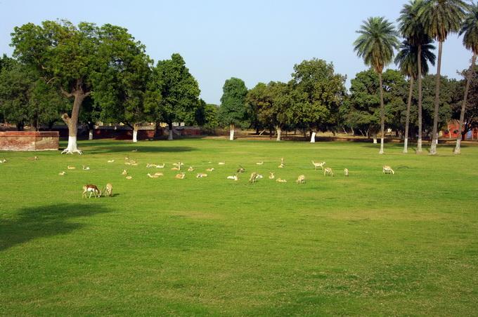 6草地上的劍羚.jpg