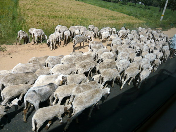 16-前往地下宮殿途中遇到的羊群.jpg