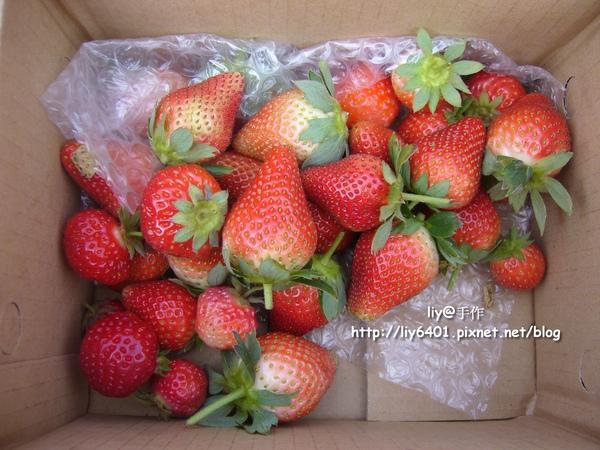 採草莓6.jpg