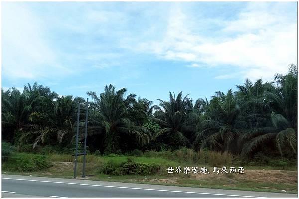 3棕櫚樹度假村0031.jpg