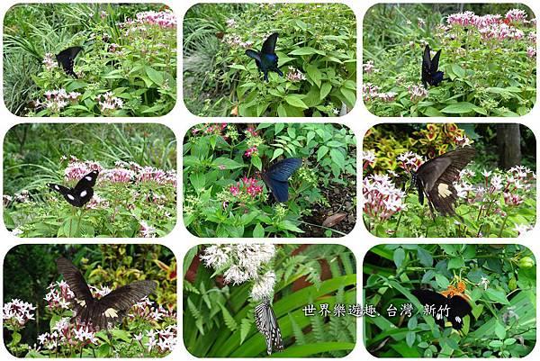 14A6號花園0016.jpg