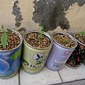罐頭盆栽們