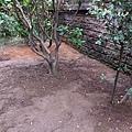 小花圃大整理