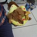 Velu和他的新玩具,高飛狗是舊玩具