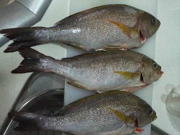 黃雞魚,一人一條