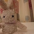窗簾^^和我的兔兔