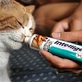 INTELLIGENT因特力淨寵物酵素牙膏-氣味.jpg