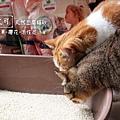 【Eco艾可】天然豆腐貓砂-可無痛換砂的仿礦型豆腐砂.jpg