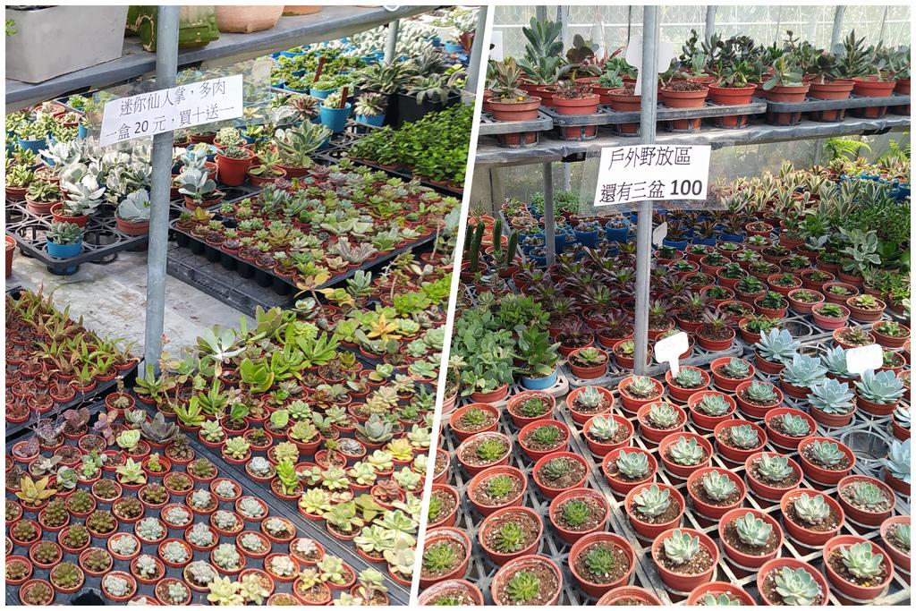 超多品種植物.jpg