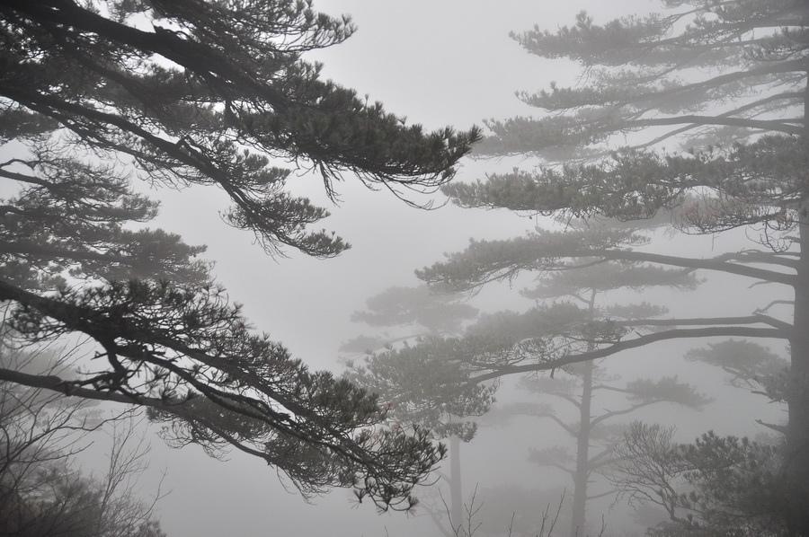 霧黃山19