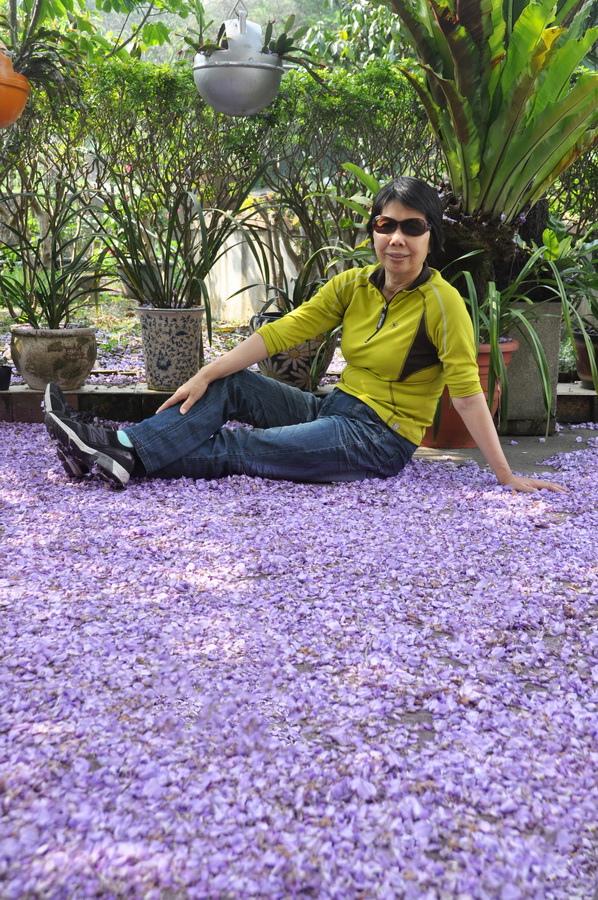 浪漫的紫色之春05_調整大小.jpg