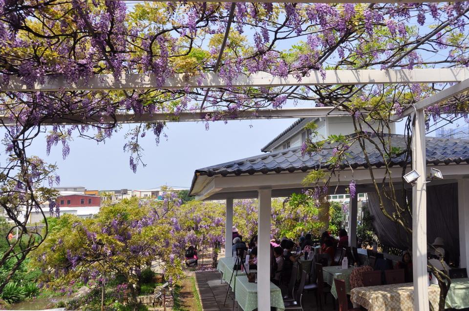 浪漫的紫色之春07_調整大小.jpg