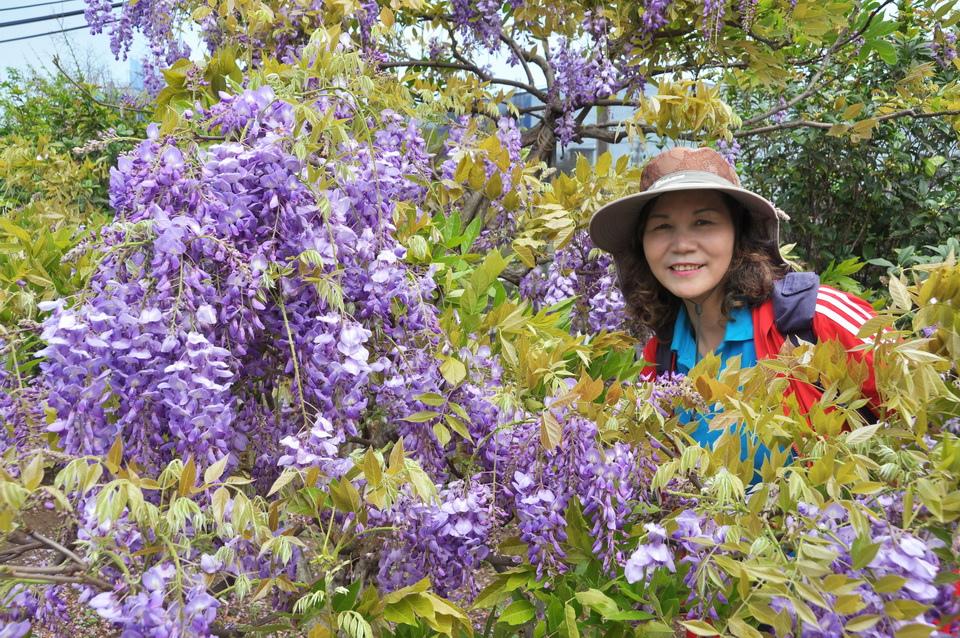 浪漫的紫色之春09_調整大小.JPG