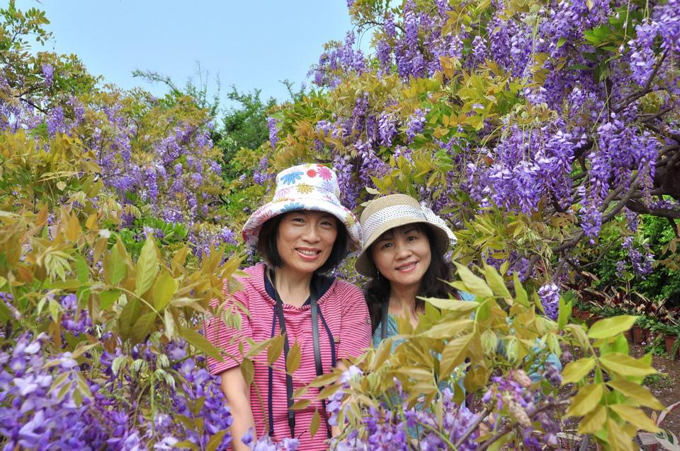 浪漫的紫色之春10_調整大小.JPG