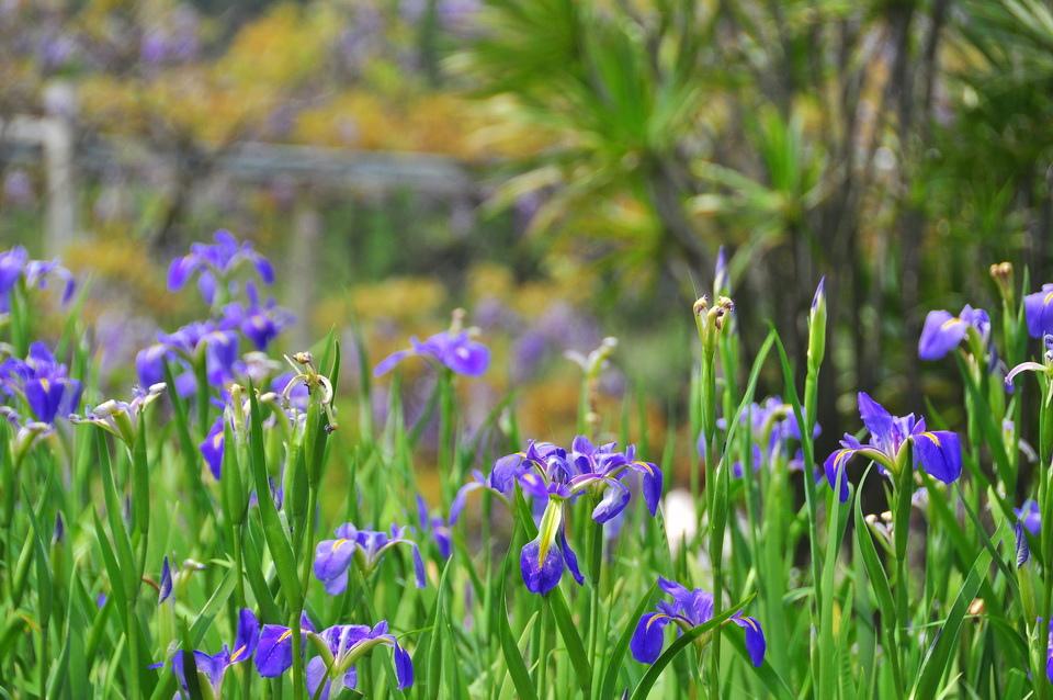 浪漫的紫色之春13_調整大小.JPG