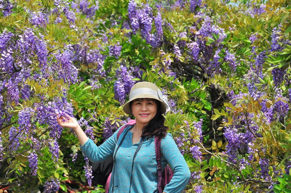 浪漫的紫色之春15_調整大小.JPG