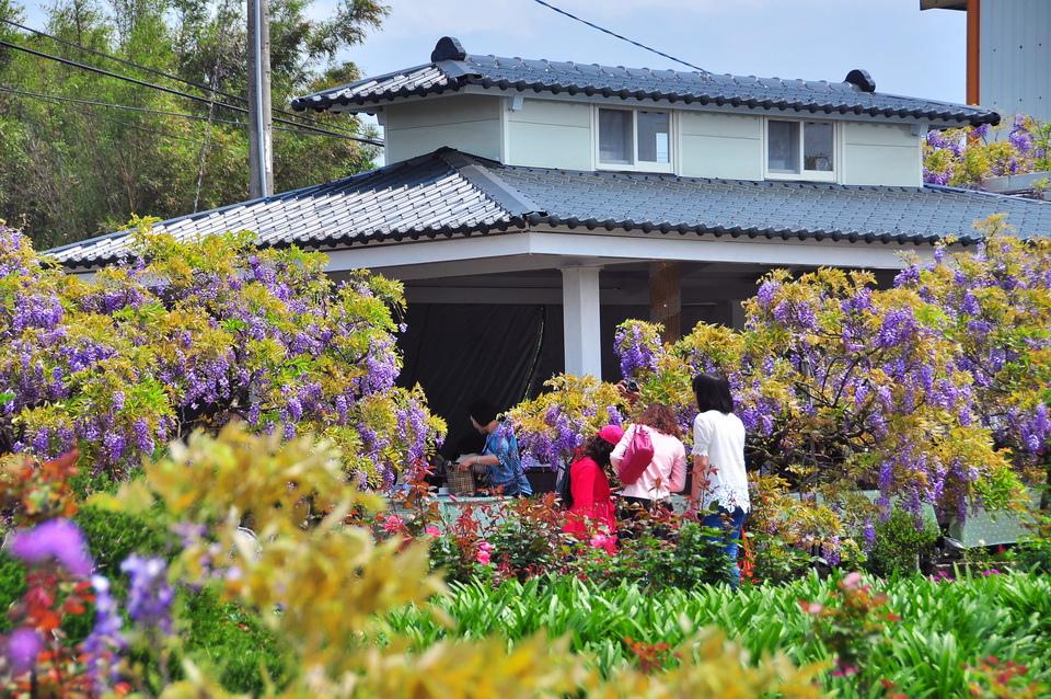 浪漫的紫色之春17_調整大小.JPG