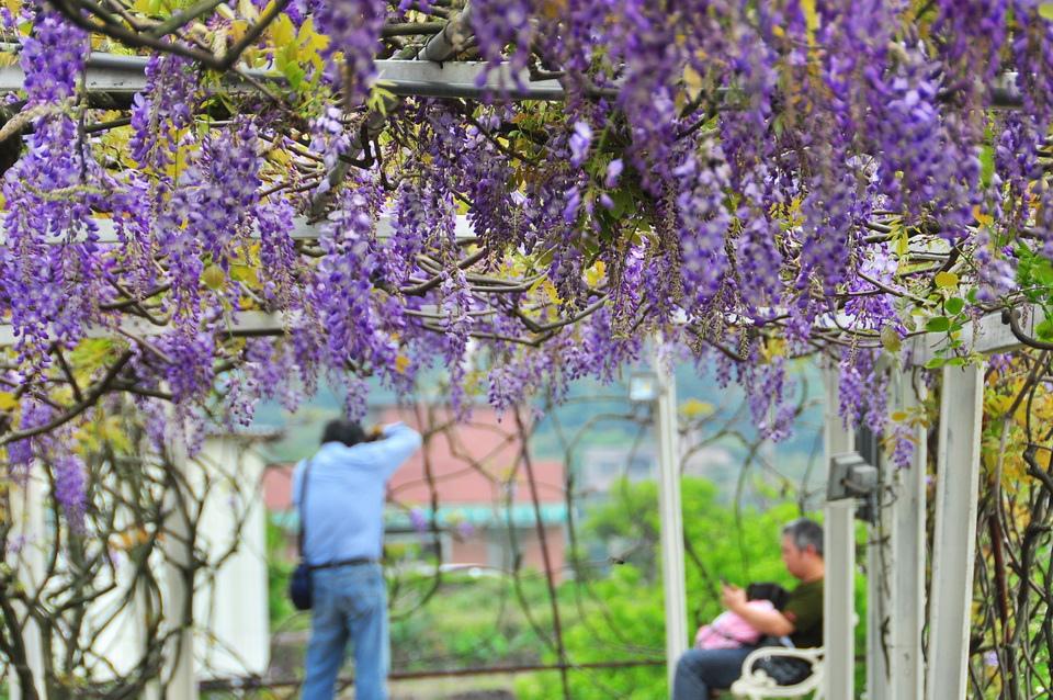 浪漫的紫色之春20_調整大小.JPG