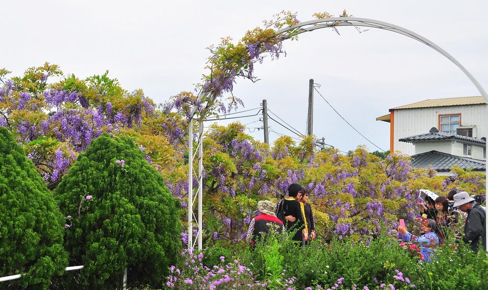 浪漫的紫色之春22_調整大小.JPG