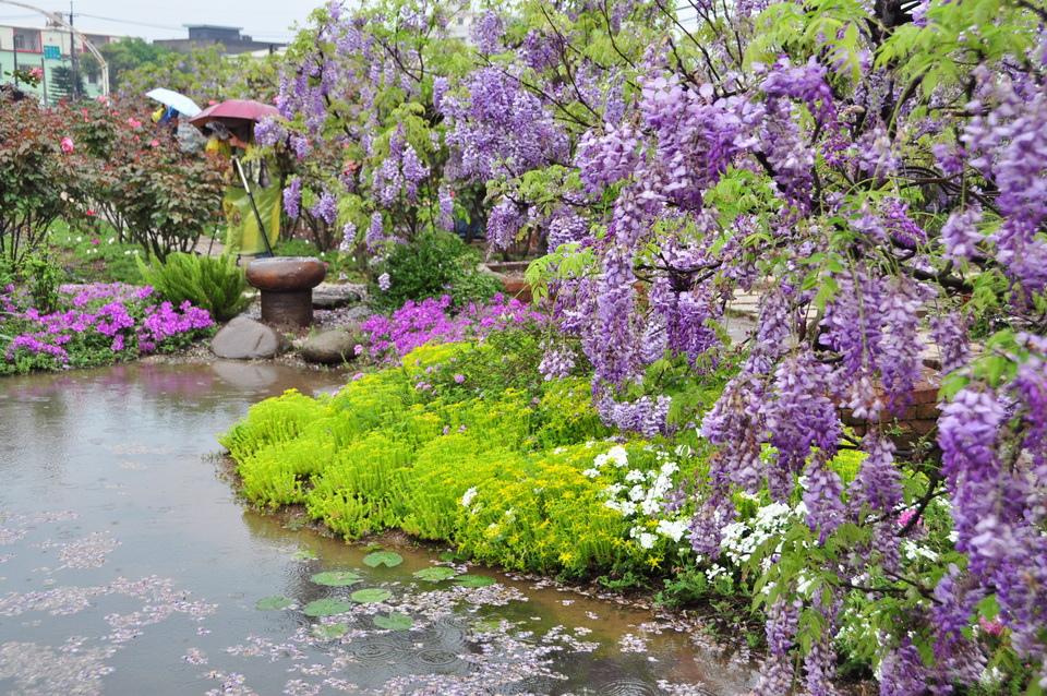 浪漫的紫色之春25_調整大小.JPG