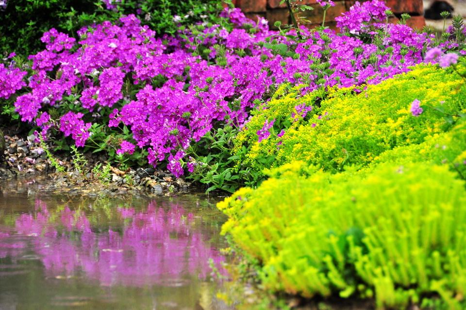 浪漫的紫色之春26_調整大小.JPG