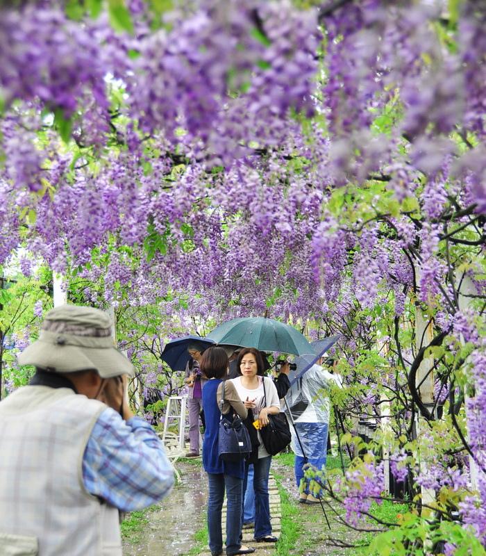 浪漫的紫色之春27_調整大小.jpg