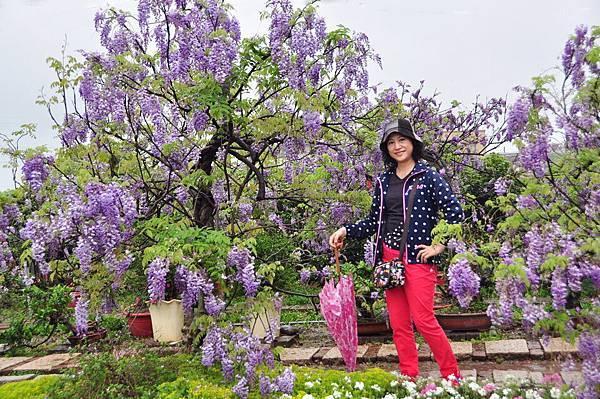 浪漫的紫色之春31_調整大小.jpg
