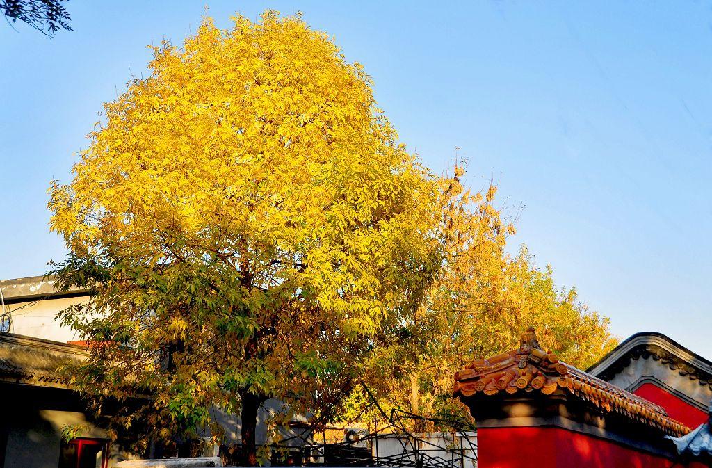 北京景山公園003