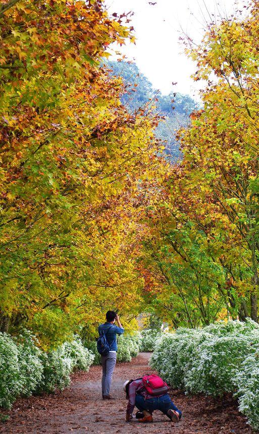 驚艷黃楓白雪在沐心泉027