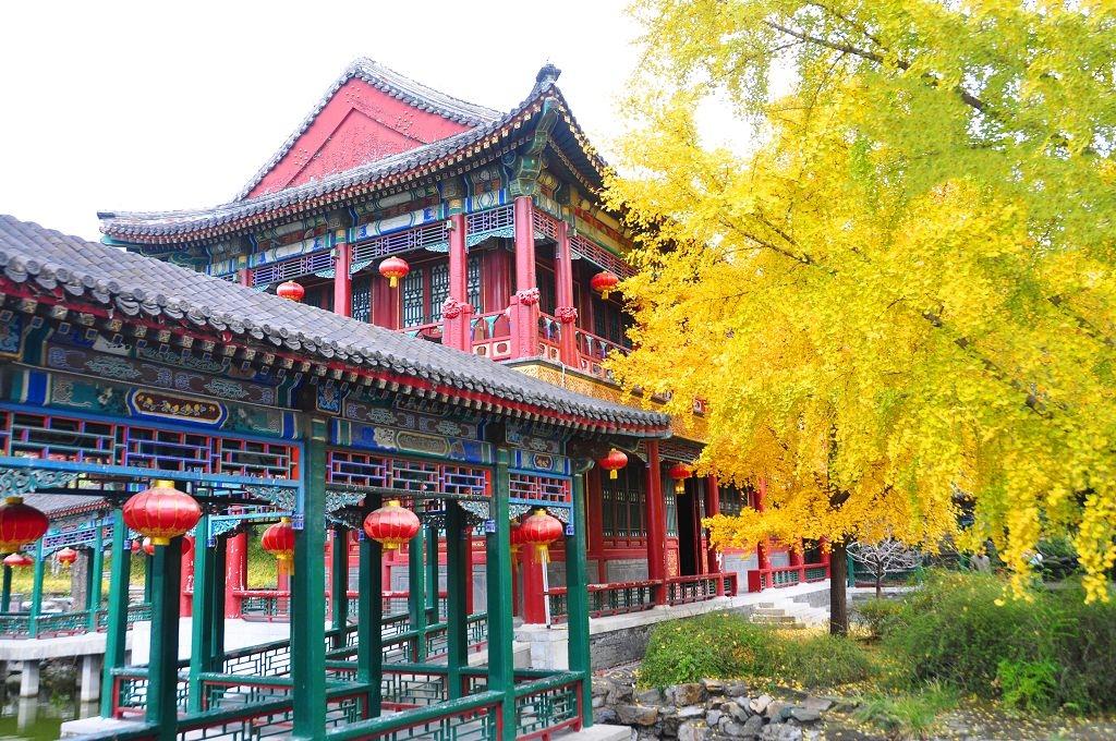 2015北京大觀院銀杏004.jpg
