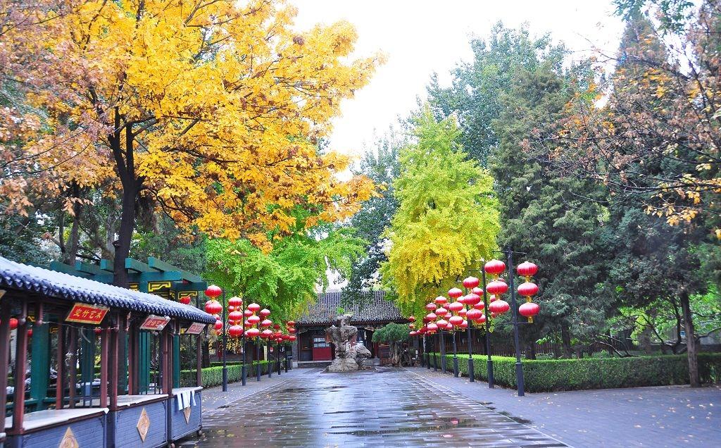 2015北京大觀院銀杏007.jpg
