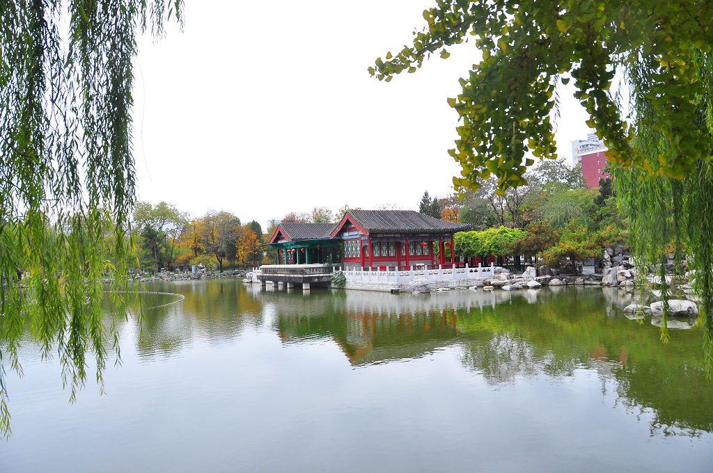 2015北京大觀院銀杏012.jpg