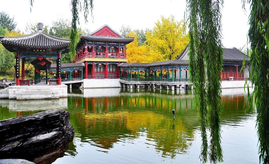 2015北京大觀院銀杏015.jpg
