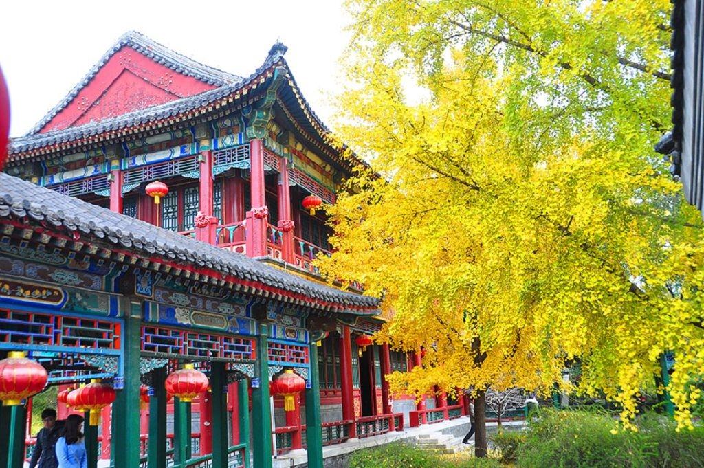 2015北京大觀院銀杏024.jpg