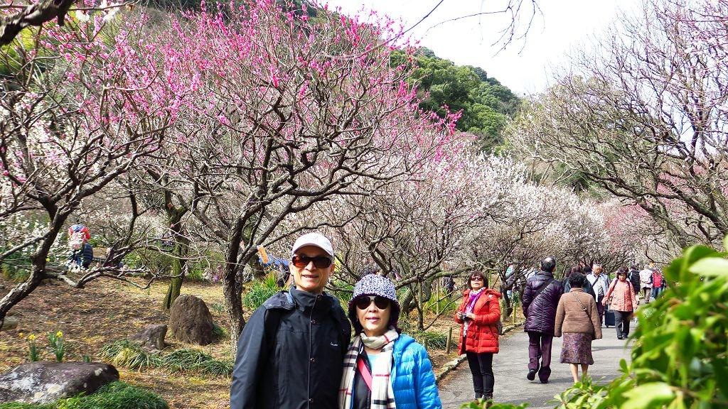 2017.2.18熱海梅園梅花祭004.jpg