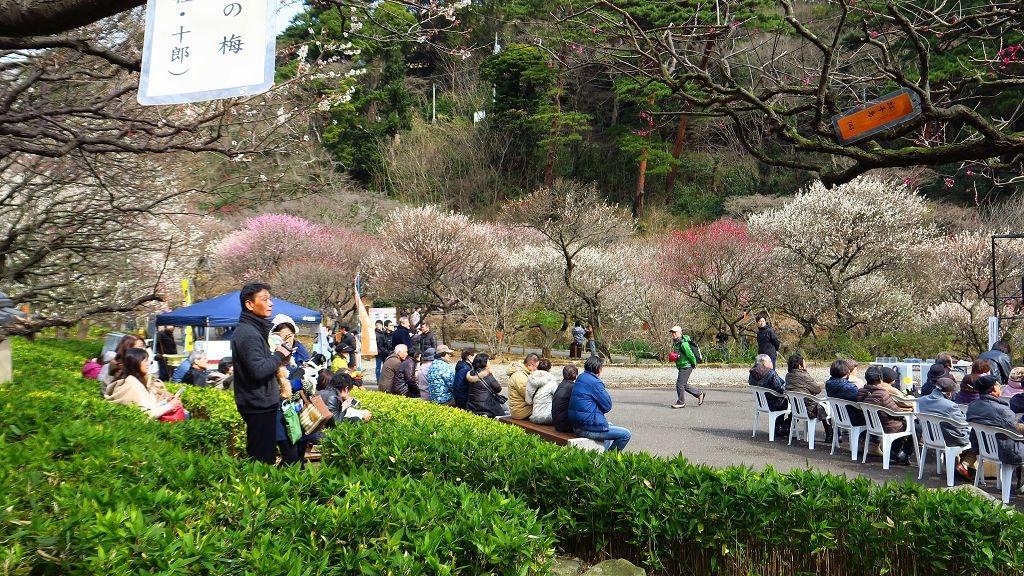 2017.2.18熱海梅園梅花祭005.jpg
