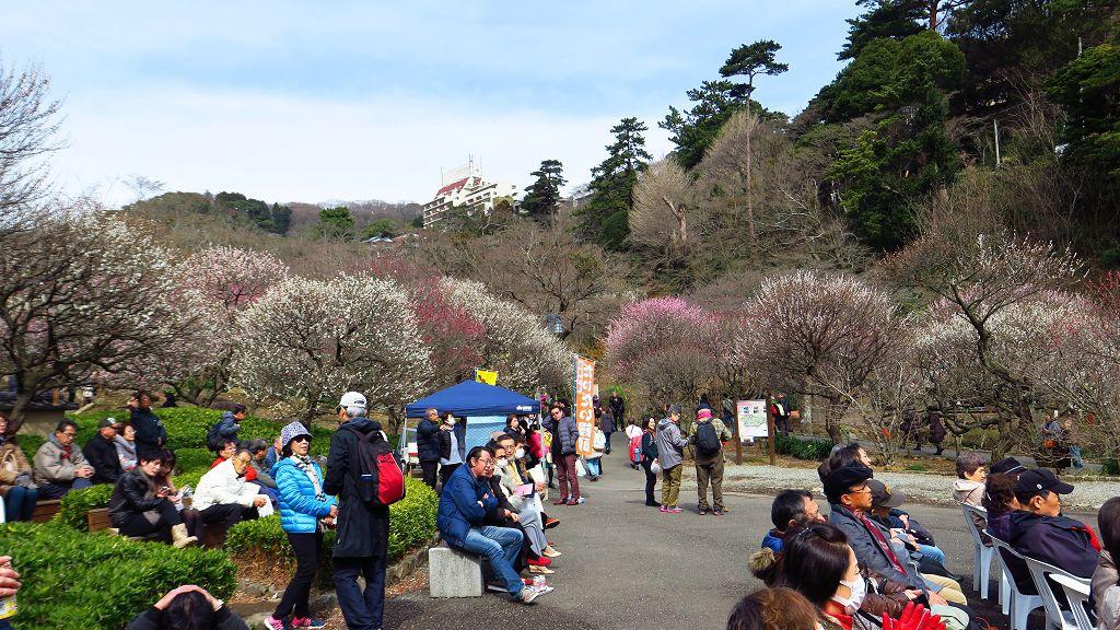 2017.2.18熱海梅園梅花祭011.jpg