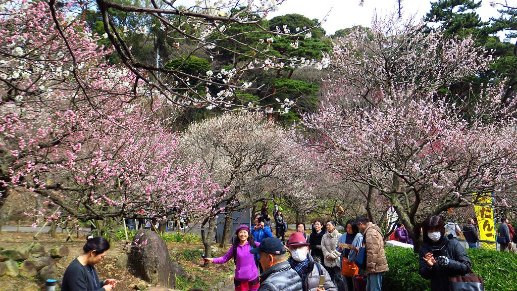 2017.2.18熱海梅園梅花祭012.jpg