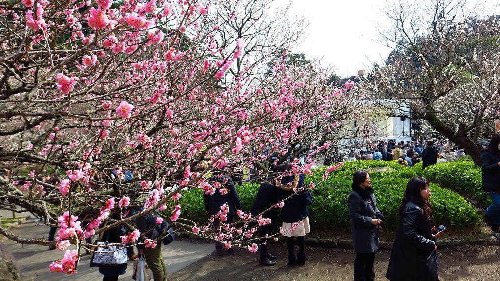 2017.2.18熱海梅園梅花祭015.jpg