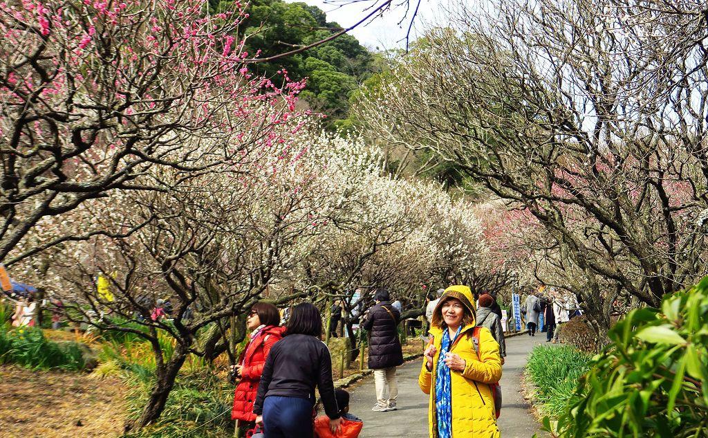 2017.2.18熱海梅園梅花祭017(001).jpg