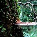 29-02猴板凳~蕈類